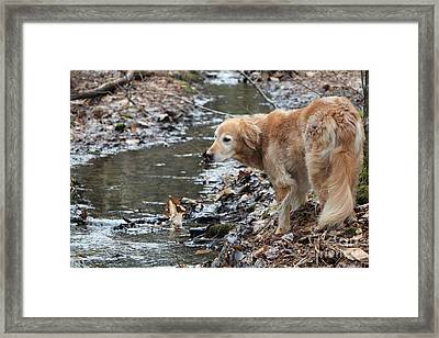 What Will My Mother Say Framed Print