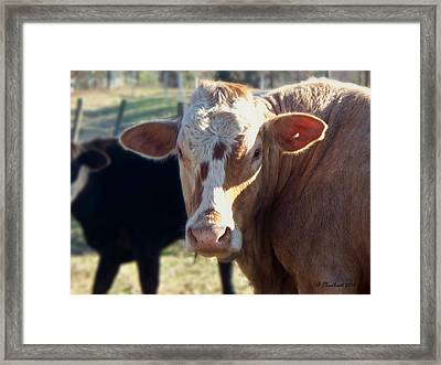 Framed Print featuring the photograph What You Lookin' At by Betty Northcutt