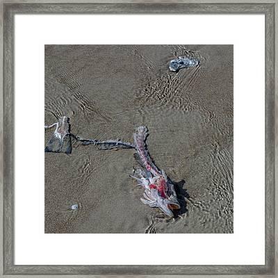 The Stalker Framed Print by Betsy Knapp