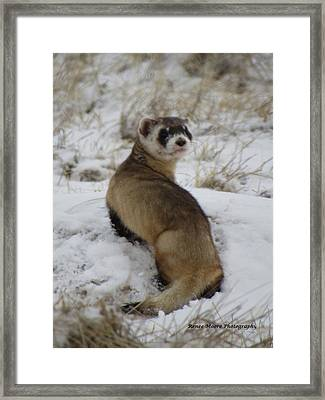 Whatare You Looking At Framed Print by Renee Moore