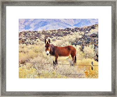 Whatcha Doing Framed Print