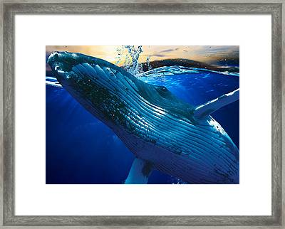 Whate Watching Art Framed Print by Marvin Blaine