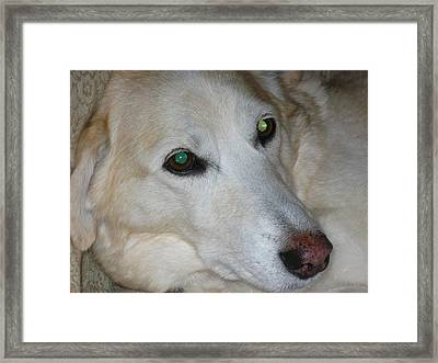 What's A Princess Supposed To Do Framed Print by Stephen Davis