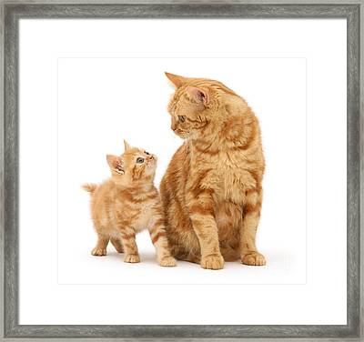 Framed Print featuring the photograph What's For Dinner, Mum by Warren Photographic