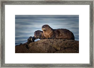 Framed Print featuring the photograph Whats For Dinner by Randy Hall