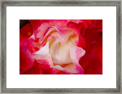 Whats In A Name Framed Print by Susan Vineyard