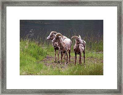 Whats Next Framed Print