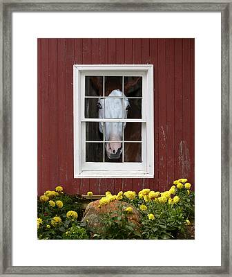 What's Out There? Framed Print