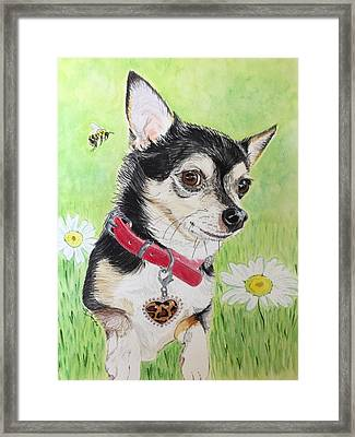 What's The Buzz? Framed Print