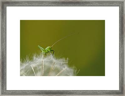 Framed Print featuring the photograph What's The Time.... by Richard Patmore