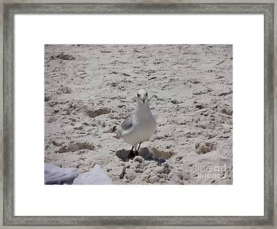 What's Up? Framed Print by Megan Cohen