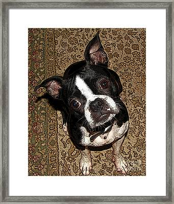 Whats Up Rams Framed Print by Deborah Johnson