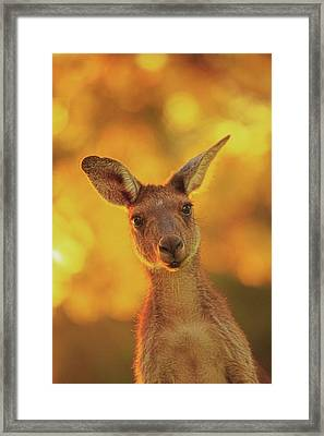Framed Print featuring the photograph What's Up, Yanchep National Park by Dave Catley