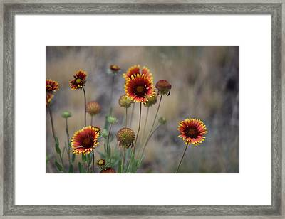 #whatwillyouleavebehind Framed Print by Becky Furgason