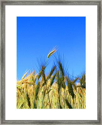 Wheat - A Cut Above Framed Print by Antique Images