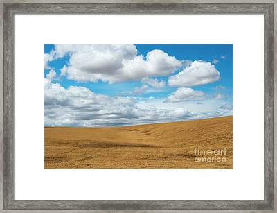 Wheat And Fleece Framed Print by Mike Dawson