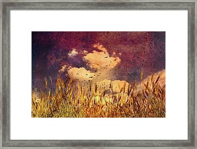 Wheat Field Dream Framed Print