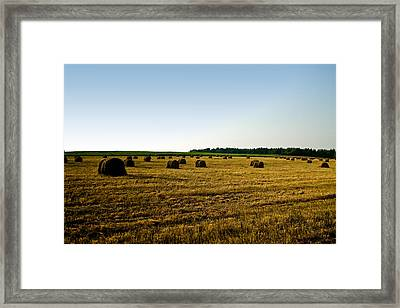Framed Print featuring the photograph Wheat Field by Gary Smith