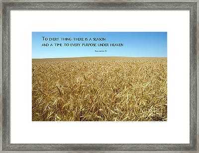 Wheat Field Harvest Season Framed Print