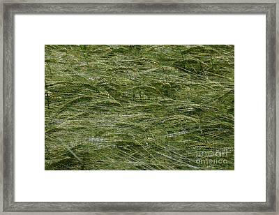 Framed Print featuring the photograph Wheat Field by Jean Bernard Roussilhe