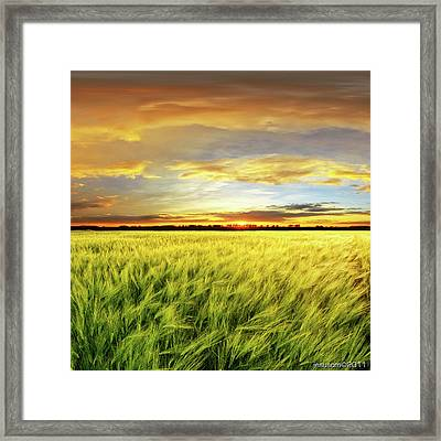 Wheat Field With Sunset Framed Print