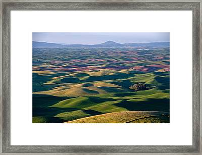 Wheat Fields Of Palouse Framed Print by Lee Chon