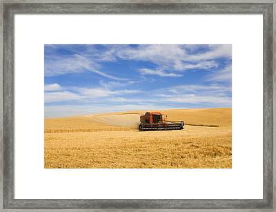 Wheat Harvest Framed Print by Mike  Dawson