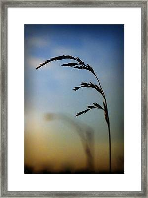 Wheat In Silhouette Framed Print by Dave Chafin