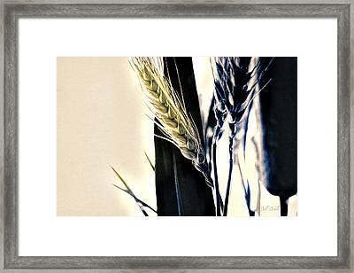 Wheat Still-life Framed Print by Bob Orsillo