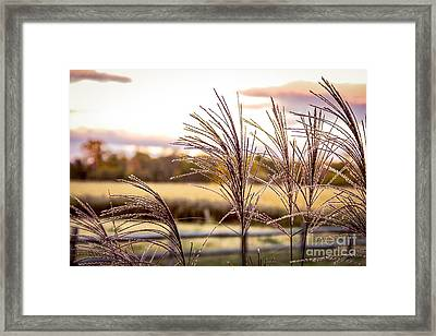 Wheat Sunset Framed Print by Keith Rousseau