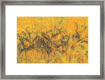 Wheatscape 6343 Framed Print