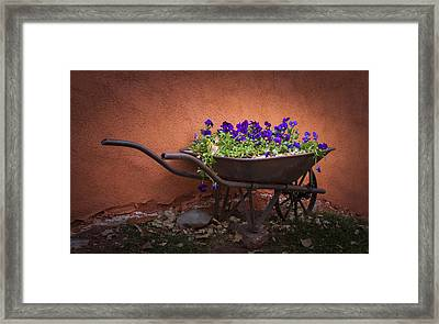Wheelbarrow Full Of Pansies Framed Print