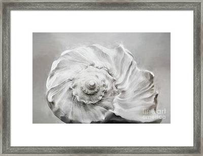 Framed Print featuring the photograph Whelk In Black And White by Benanne Stiens