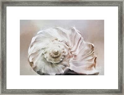 Framed Print featuring the photograph Whelk Shell by Benanne Stiens