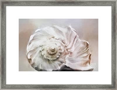 Whelk Shell Framed Print by Benanne Stiens
