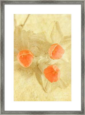 When Beauty Fades Framed Print by Jorgo Photography - Wall Art Gallery
