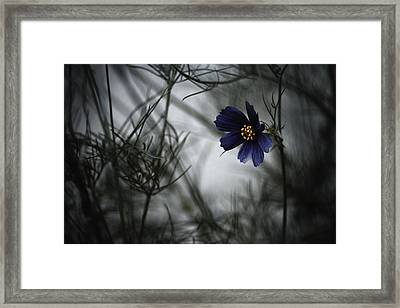When Cosmos Will Be Blue Framed Print