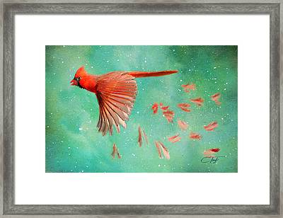 When Feathers Fly Framed Print by Colleen Taylor