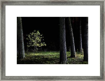 Framed Print featuring the photograph When First Leaves Start To Fall - Autumn by Dirk Ercken