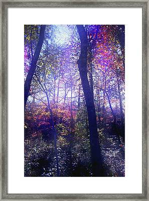 When Forests Dream Framed Print by Nina Fosdick