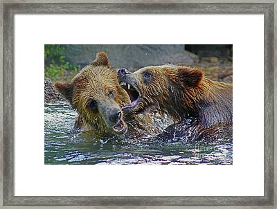 When Grizzlies Play Framed Print