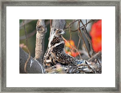 When I Was One Month Old Framed Print