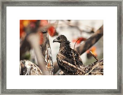 When I Was Two Months Old Framed Print
