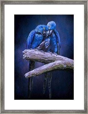 When I'm Feeling Blue Framed Print
