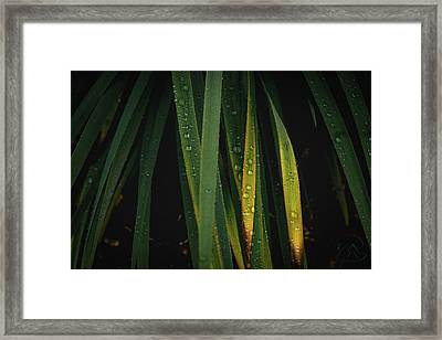 When It Rains Framed Print