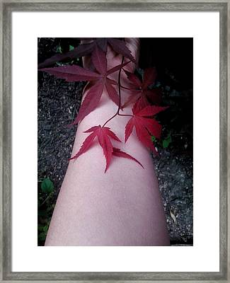 When Life Gives You Japanese Maple Leaves... Framed Print by Brynn Ditsche