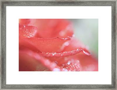 When Love Is Sweet Framed Print