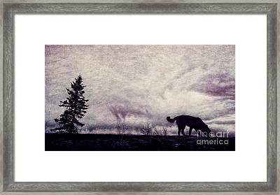 When Night Closes In Framed Print