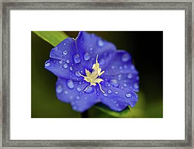 Framed Print featuring the photograph When Old Becomes New by Melanie Moraga