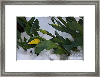 When Spring Meets Winter Framed Print
